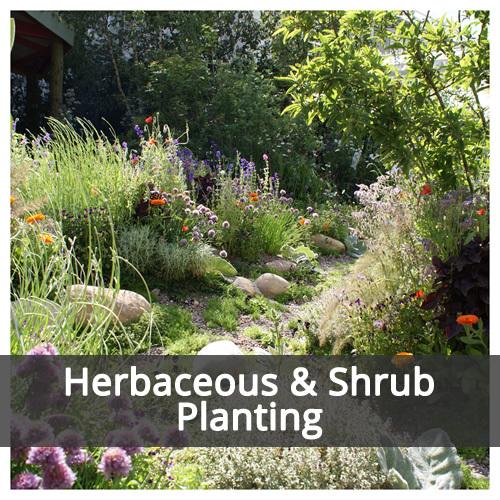 Herbaceous & Shrub Planting