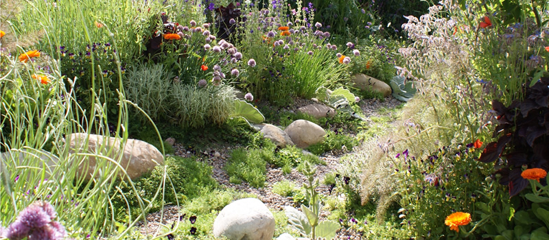 Herbaceous and Shrub Planting