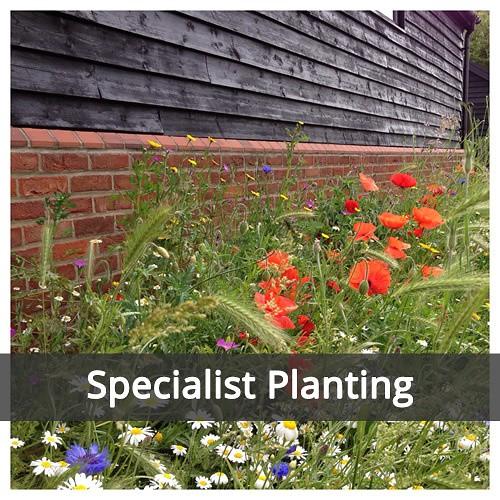 Specialist Planting